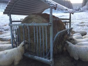Unsere Schafe mit ihrem Winterfutter