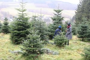 Selberaussuchen des Baums in der Schonung
